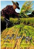 برنج و خطر آلودگی