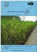 ریخت شناسی رشد و نمو گیاه برنج
